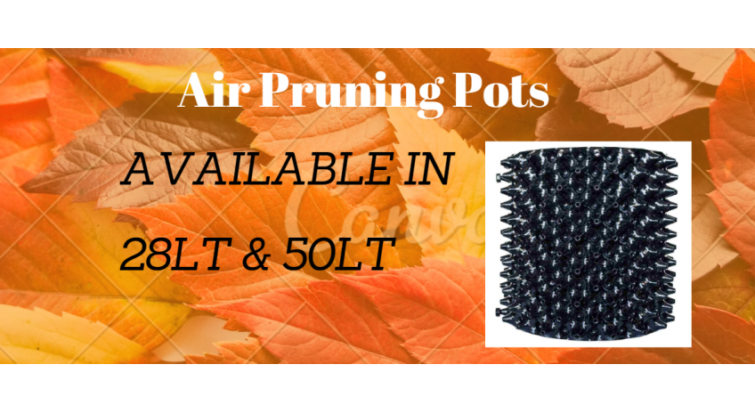 air prunning pot